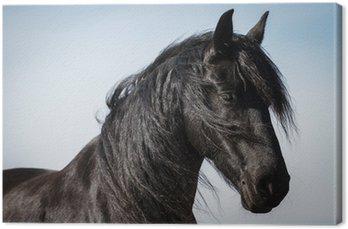 Tableau sur Toile Portrait cheval frison beauté