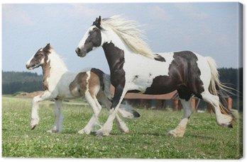 Tableau sur Toile Portrait de la belle cheval arabe