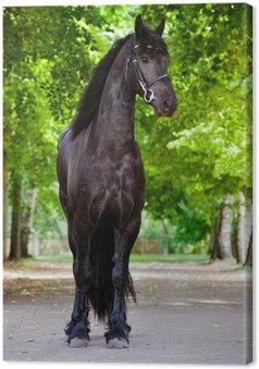 Tableau sur Toile Portrait en pied de cheval frison