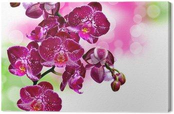 Tableau sur Toile Près de la fleur d'orchidée