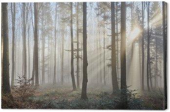Tableau sur Toile Rayons de soleil à travers la forêt brumeuse