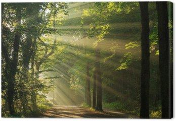 Tableau sur Toile Rayons de soleil dans la forêt