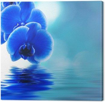 Tableau sur Toile Réflexion des orchidées