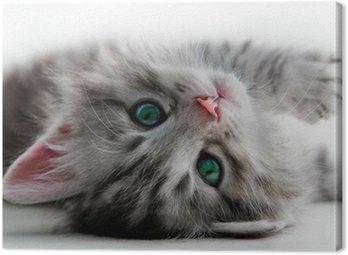 Tableau sur Toile Reste Kitten - isolé