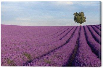 Tableau sur Toile Rich champ de lavande en Provence avec un seul arbre