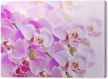 Tableau sur Toile Rose orchidée branche de près
