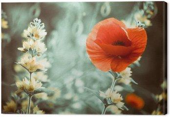 Tableau sur Toile Rouge fleur de pavot au jardin sunset