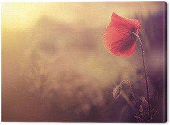 Tableau sur Toile Sauvage de fleur de pavot