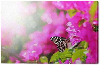 Tableau sur Toile Scène du matin Majestic avec papillon alimentation de nectar d'une bou