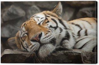 Tableau sur Toile Sleeping tiger