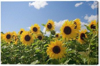 Tableau sur Toile Sonnenblumen