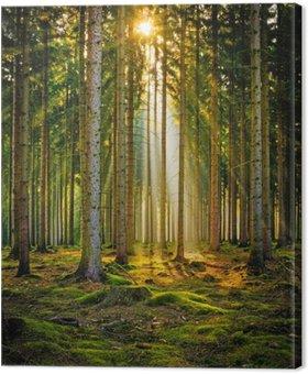 Tableau sur Toile Sonnenstrahlen im Nadelwald im Morgennebel
