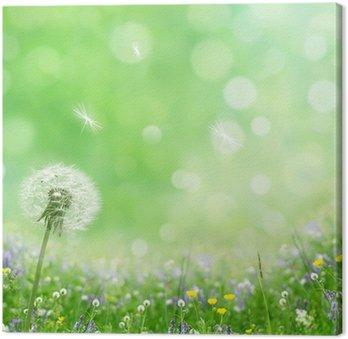 Tableau sur Toile Spring Background