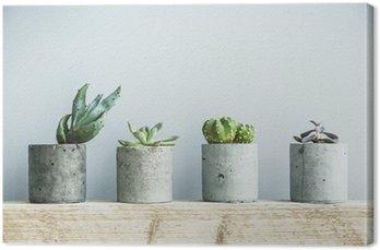 Tableau sur Toile Succulentes en pot béton bricolage. Chambre scandinave décoration intérieure