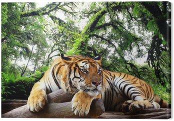 Tableau sur Toile Tiger cherchez quelque chose sur le rocher dans la forêt tropicale à feuilles persistantes