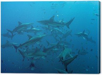 Tableau sur Toile Tiger Shark avec les requins à pointe noire