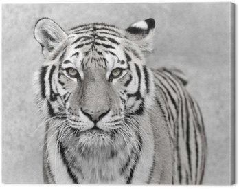 Tableau sur Toile Tigre de l'Amour (Panthera tigris altaica)