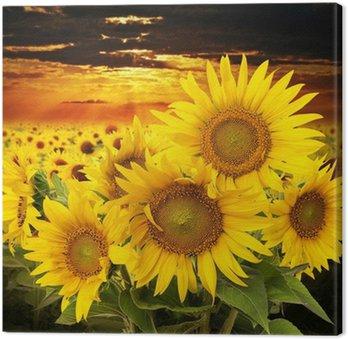 Tableau sur Toile Tournesols sur un champ et le coucher du soleil