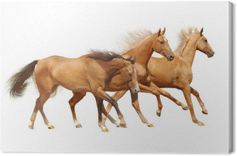 Tableau sur Toile Trois chevaux sur blanc