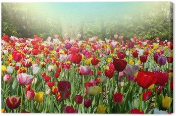 Tableau sur Toile Tulipani