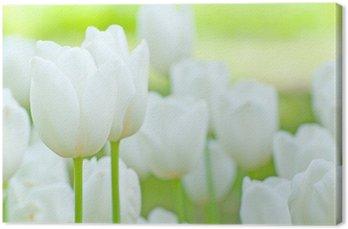 Tableau sur Toile Tulipes blanches