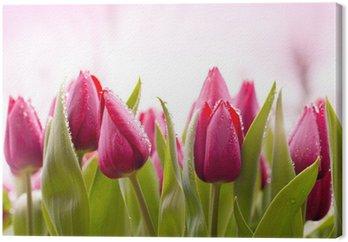 Tableau sur Toile Tulipes fraîches avec des gouttes de rosée