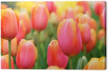 Tableau sur Toile Tulipes près