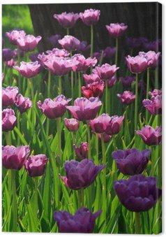 Tableau sur Toile Tulipes roses de diamant