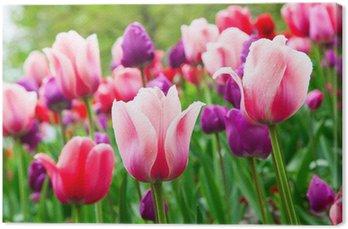 Tableau sur Toile Tulips