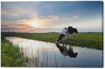 Tableau sur Toile Vaches qui paissent au coucher du soleil
