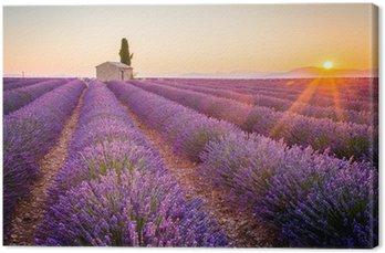 Tableau sur Toile Valensole, Provence, France. champ plein de fleurs pourpres de lavande