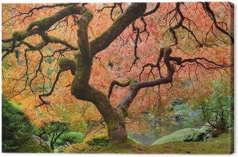 Tableau sur Toile Vieil arbre d'érable japonais à l'automne