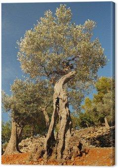 Tableau sur Toile Vieux olivier