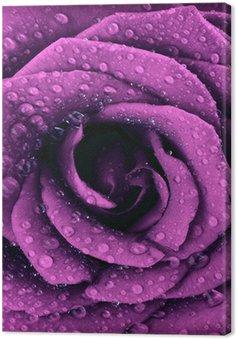 Tableau sur Toile Violet foncé fond rose