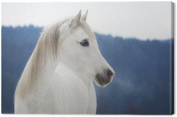 Tableau sur Toile Weiße Vollblut Araber Stute im Schnee