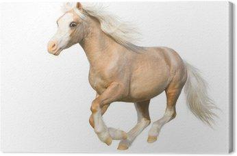 Tableau sur Toile Welsh poney au galop