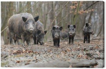 Tableau sur Toile Wild boar
