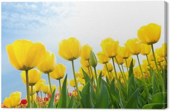 Tableau sur Toile Yellow tulips
