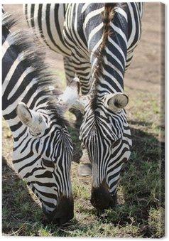 Tableau sur Toile Zebra alimentation