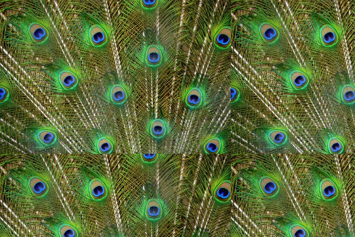 Tapeta Pixerstick 孔雀 の 羽 - Savci