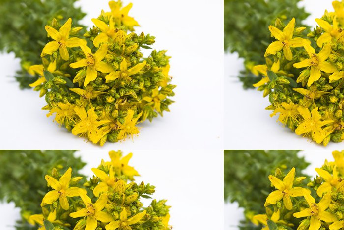 Tapeta Pixerstick Зверобой - Květiny