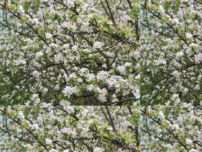 Vinylová Tapeta Весна. Яблоня в цвету. - Stromy