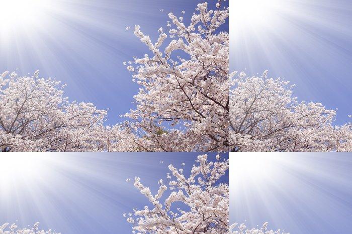 Tapeta Pixerstick 桜 と 陽光 - Příroda a divočina