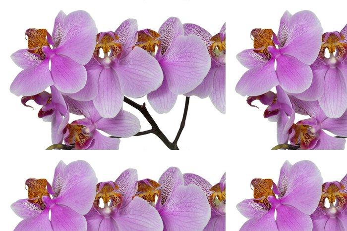 Tapeta Pixerstick Цветок орхидеи розовой - Květiny