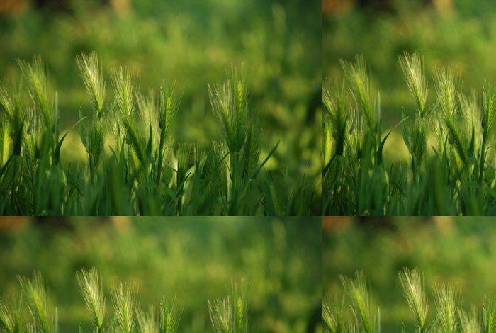 Tapeta Pixerstick 麦 の 穂 - Rostliny