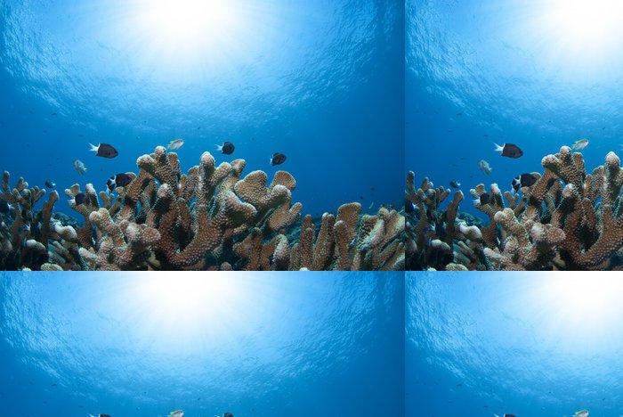 Tapeta Pixerstick 青 い 海 と 太陽 と サ ン ゴ と 小魚 - Podvodní svět