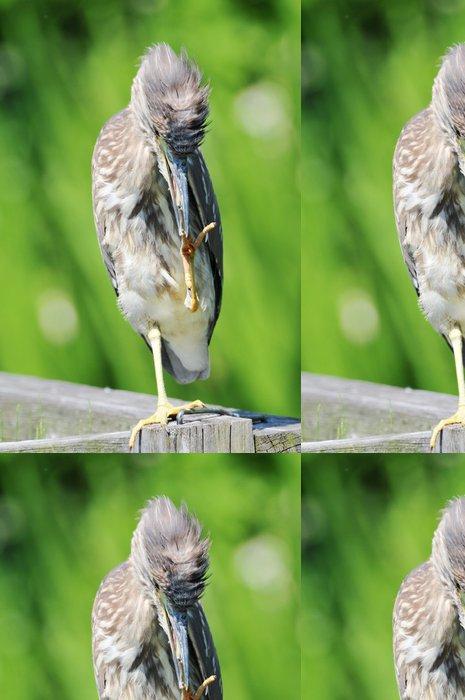 Tapeta Pixerstick ゴ イ サ ギ の 幼鳥 - Ptáci