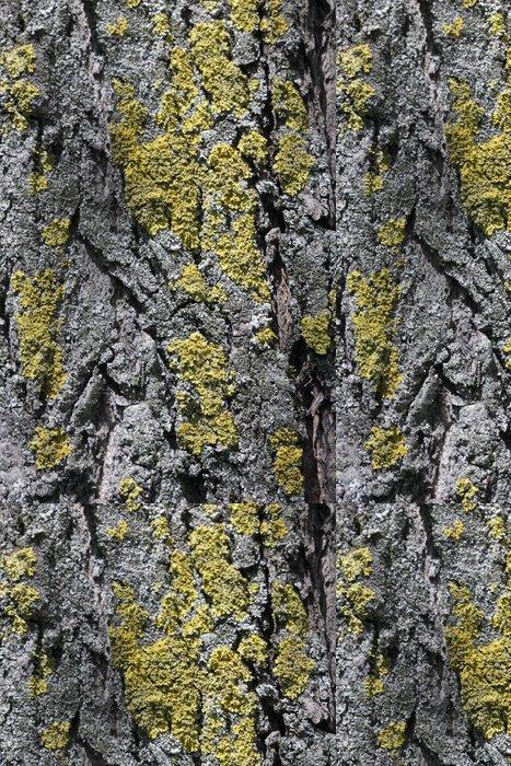 Tapeta Pixerstick Мох на коре дерева - Struktury