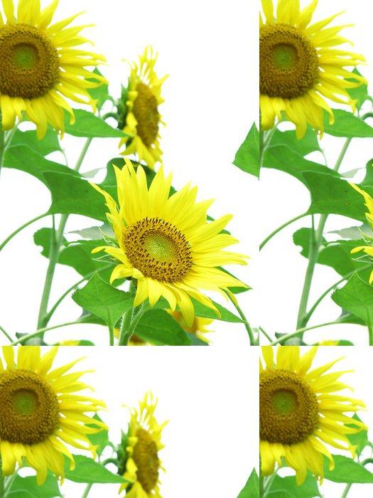 Tapeta Pixerstick ひ ま わ り の 花 - Květiny
