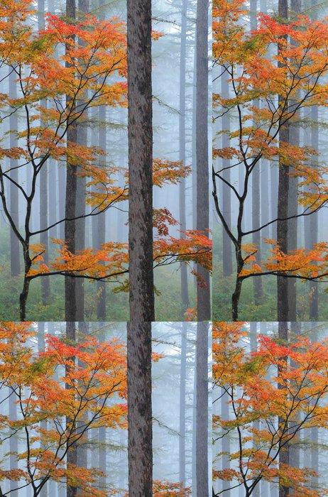 Tapeta Pixerstick 霧 の 森林 - Roční období
